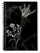 Wild And Beautiful B/w Spiral Notebook