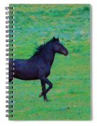 Wild And On The Go Spiral Notebook