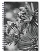 Wild Aster And Honey Bee Bw Spiral Notebook