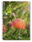 Wild Beautiful Telopea Flower In Sunset Light  Spiral Notebook