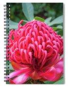 Wild Beauty Watarah Spiral Notebook