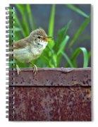 Wild Bird In A Natural Habitat.  Spiral Notebook