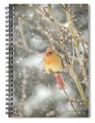 Wild Birds Of Winter - Female Cardinal In The Snow Spiral Notebook