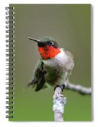 Wild Birds - Ruby-throated Hummingbird Spiral Notebook