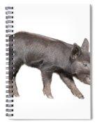Wild Black Piglet Spiral Notebook