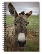 Wild Burro Spiral Notebook