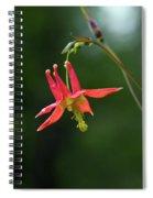 Wild Columbine Wildflower Spiral Notebook