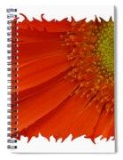 Wild Daisy Spiral Notebook