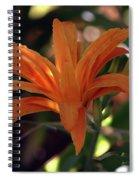Wild Daylilies 1167 H_2 Spiral Notebook