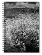 Wild Desert Flowers Blooming In Black And White In The Anza-borrego Desert State Park Spiral Notebook