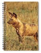 Wild Dog Of Botswana Spiral Notebook