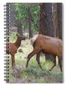 Wild Elk Baby And Mom Spiral Notebook