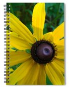 Brown Eyed Suzy  Spiral Notebook
