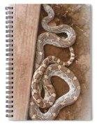 Wild Friendly Gopher Snake Spiral Notebook
