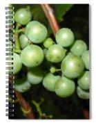 Wild Grapes In August Spiral Notebook