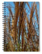 Wild Grass Spiral Notebook