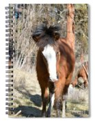 Wild Hair Spiral Notebook