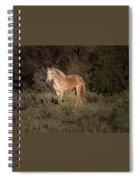 Wild Horse At Sunset Spiral Notebook