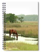 Wild Horse In Saltmarsh Spiral Notebook