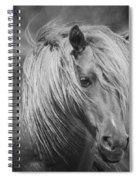 Wild Horse Of Assateague Spiral Notebook