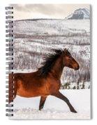 Wild Horse Spiral Notebook