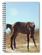 Wild Horses Desert Of Mexico Spiral Notebook