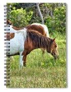 Wild Horses Of Assateague 5 Spiral Notebook