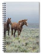 Wild Horses - Steens 1 Rw Spiral Notebook