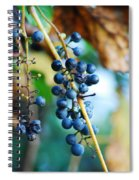 Wild Michigan Grapes Spiral Notebook