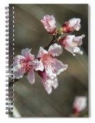Wild Mountain Blossoms Spiral Notebook