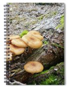 Wild Mushrooms 2 Spiral Notebook