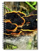 Wild Mushrooms Growing On Tree Trunk Spiral Notebook