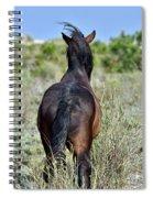 Wild Mustang Spiral Notebook