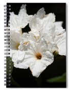 Wild Olive Tree Bloom Spiral Notebook