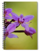 Wild Orchids 2 Spiral Notebook
