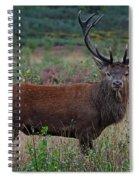Wild Red Deer Stag Spiral Notebook
