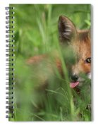 Wild Red Fox Puppy Spiral Notebook
