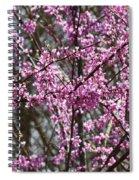 Wild Redbuds Spiral Notebook
