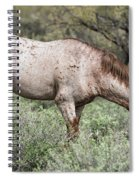 Wild Roan Stallion  Spiral Notebook