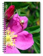 Wild Rose And The Spider Spiral Notebook