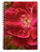 Wild Rose As Oil Spiral Notebook