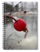 Wild Rose Hip On Mississippi River Bank Spiral Notebook