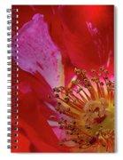 Wild Rose Spiral Notebook
