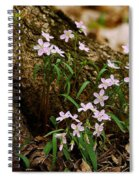 Wild Spring Beauty Spiral Notebook