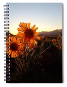 Wild Sunflowers Of Buena Vista Spiral Notebook