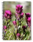 Wild Treasure Spiral Notebook