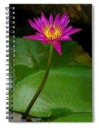 Wild Water Lily Spiral Notebook