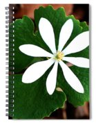 Wild White Spiral Notebook