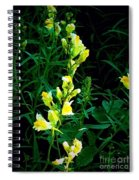 Wild Yellow Flowers On Black Background Spiral Notebook