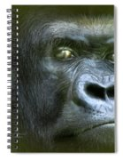 Wildeyes-silverback Spiral Notebook